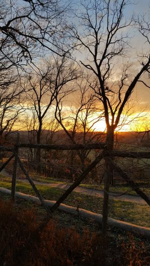 Wooden Fence Tree Sunset Sky Nature Sunlight Beauty In Nature Tranquility No People Outdoors Scenics Day Golden Hour Silhouette This Week On Eyeem Smartphonephotography College Of The Ozarks