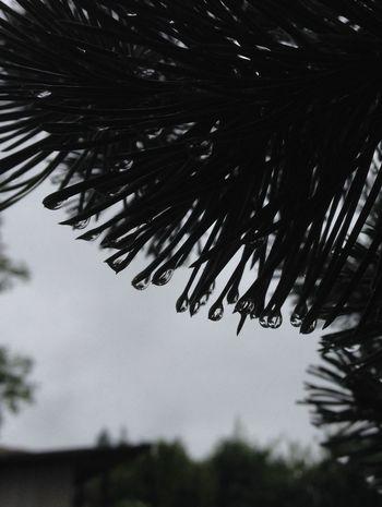 Raindrops Rainy Day Black & White