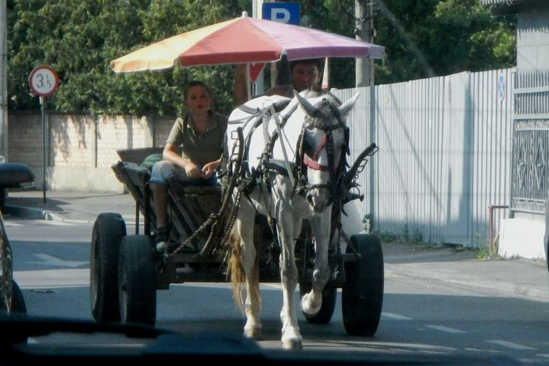Horse And Carriage , funny, vintage, Enjoying The Sun , Escaping