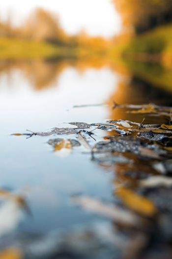 Close-up of autumn leaves on water