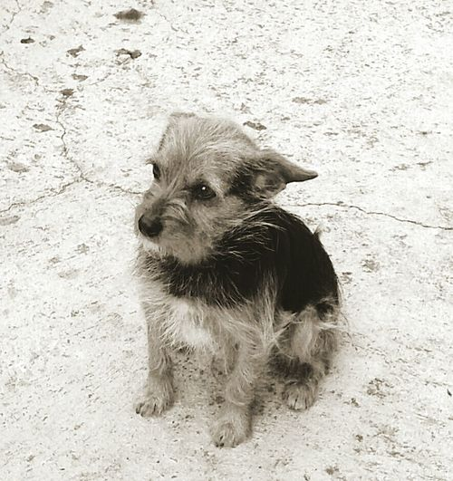 My dog! Is beautiful❤❤ First Eyeem Photo