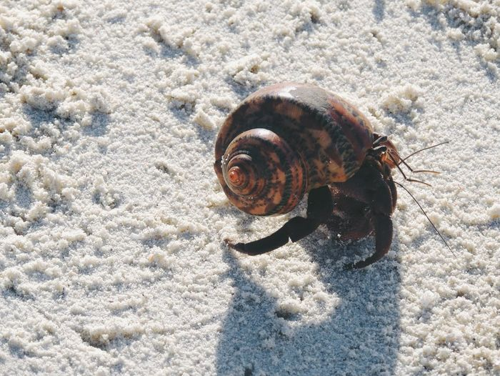 High angle view of hermit crab at sandy beach