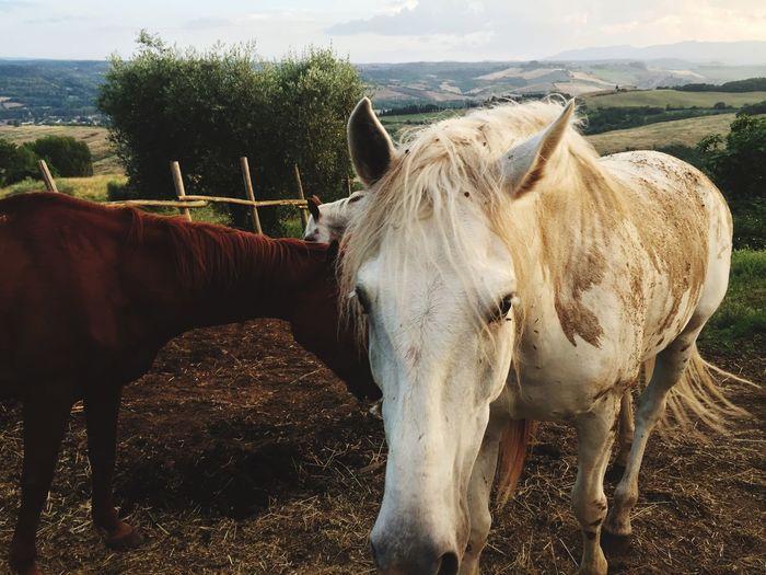 Horseriding Riding Country Horse Domestic Animals Animal Themes Mammal Livestock One Animal Herbivorous Nature