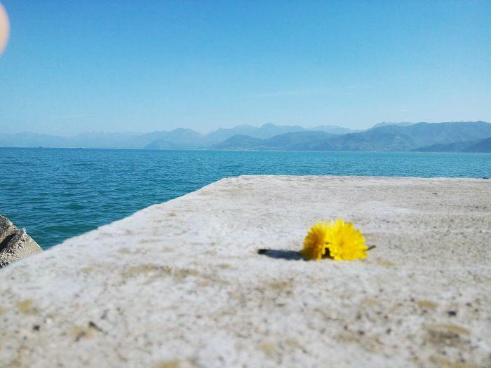 Beach Flower Tranquil Scene Plant