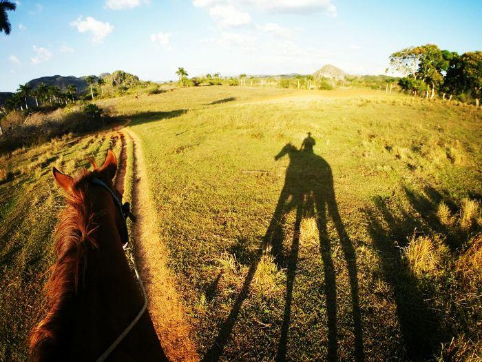 Shadow of man on grassy field against sky