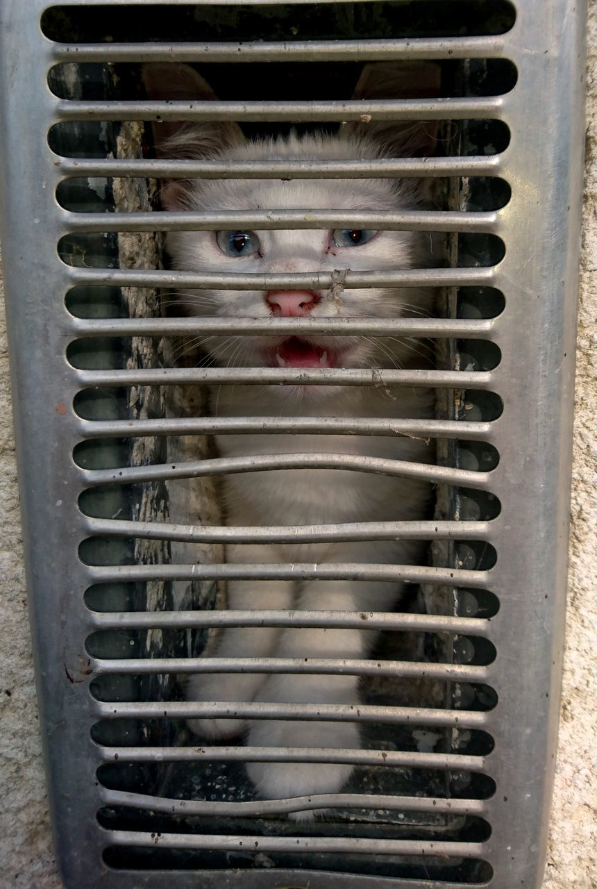 CLOSE UP OF CAT IN CAGE