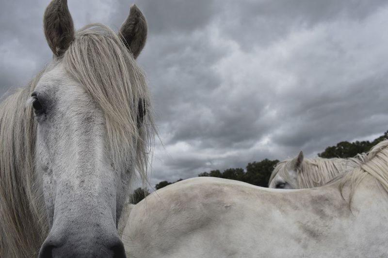 View of a horse against cloudy sky