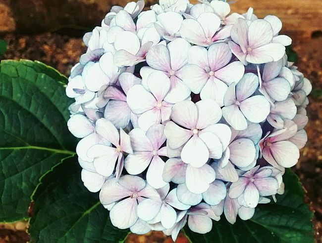 Flower Nature Day Close-up No People Freshness Beauty In Nature Plant Flower Head Outdoors Fragility Petal Beauty In Nature