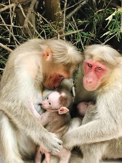 Warmth Kid Baby Monkey Wildlife & Nature Wildlife Photography Wildlife Mammals Affection Love Udhagamandalam Ooty Warmth Monkey Two Animals Togetherness Animals In The Wild Young Animal Mammal Animal Family Animal Themes Animal Wildlife Care Bonding Close-up Nature Outdoors