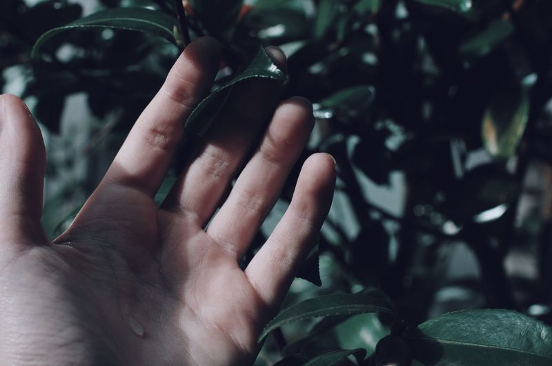 Cropped hand touching leaves
