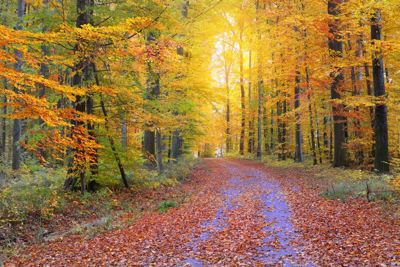 FOOTPATH AMIDST TREES IN AUTUMN DURING RAINY SEASON