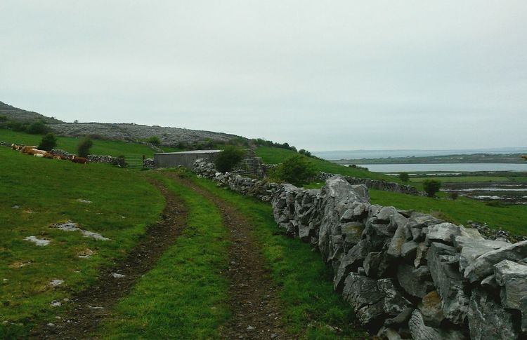 Ireland Ireland🍀 Ireland Lovers Ireland <3 Europe Eurotrip Europe Trip Nature Grass Green View Landscape Landscape_Collection Landscape_photography Road Animals Cows Cow Animal Awesome Green Color Great Great View Nice Eyemphoto