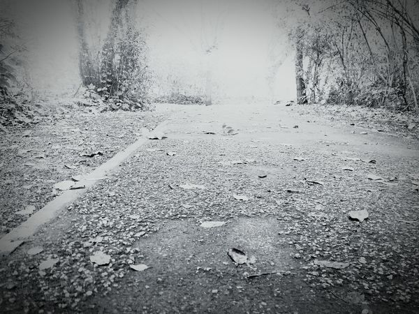 The Way Forward Change Transportation Leaf Road Autumn Tree Diminishing Perspective Tranquility Tranquil Scene Surface Level Fallen Leaf Empty Road Day Vanishing Point Non-urban Scene Nature Long Outdoors Solitude