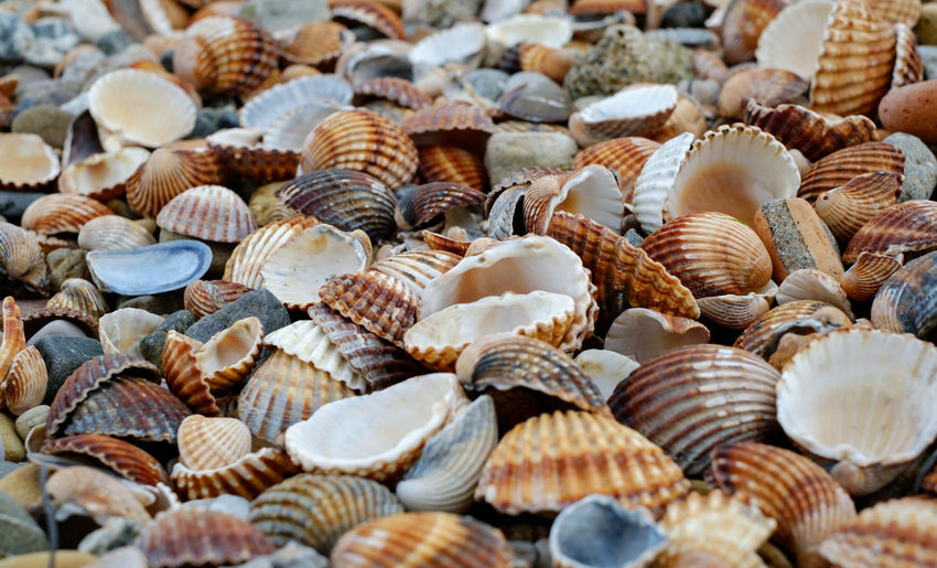 Colorful seashells on the beach Colorful Seashells On The Beach Seashell Beach Large Group Of Objects Shell Abundance Full Frame Backgrounds Animal Shell Food And Drink Food No People Animal Selective Focus Seafood Animal Wildlife Market Close-up Day Freshness Still Life Business Consumerism