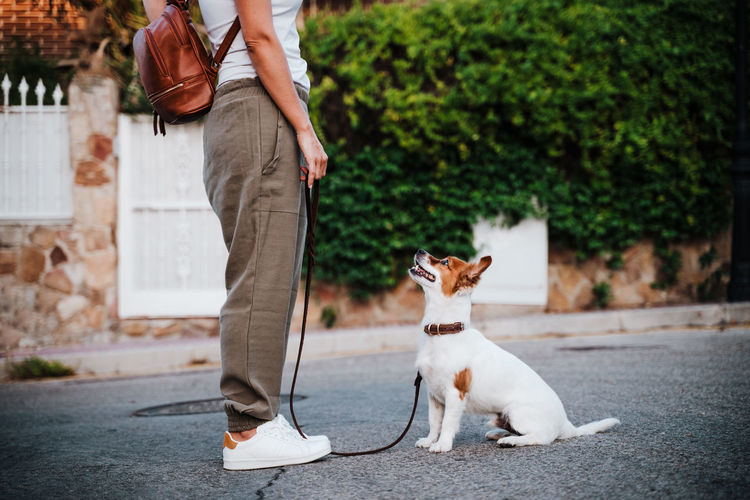 Low section of woman with dog on footpath