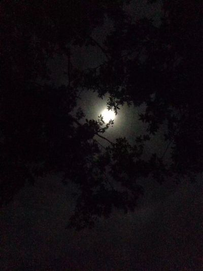Moon Full Moon Held By The Trees Redhill HEAVENONEARTH Noplaceidratherbe