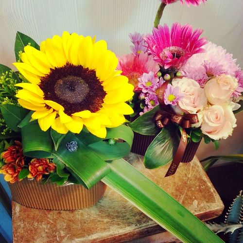 Taking Photos Flowers#nature#hangingout#takingphotos#colors#hello Worldflorafauna F