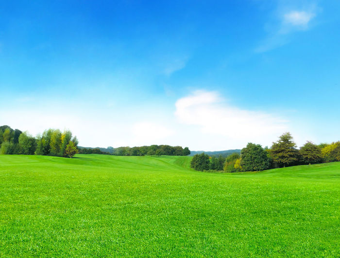 Green meadow and blue sky, summer landscape background. Grass Backgrounds Beauty In Nature Blue Sky Day Environment Field Grass Green Color Land Landscape Meadow Nature No People Non-urban Scene Outdoors Plant Rolling Landscape Rural Scene Scenics - Nature Sky Springtime Tranquil Scene Tranquility Tree