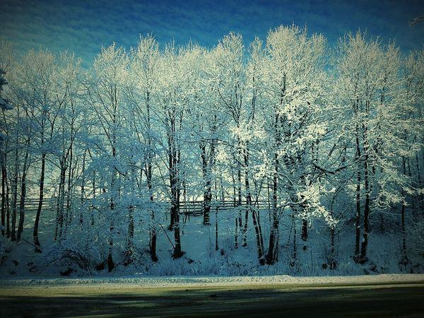 Winter Winter Snow ❄ Snowing Snow ❄
