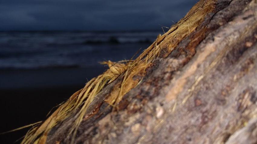 Beach Sea Nature Day First Eyeem Photo