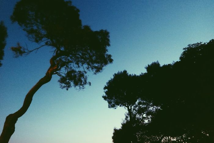 Finding New Frontiers Tree Sky Low Angle View Beauty In Nature Silhouette Nature Clear Sky No People Outdoors Scenics