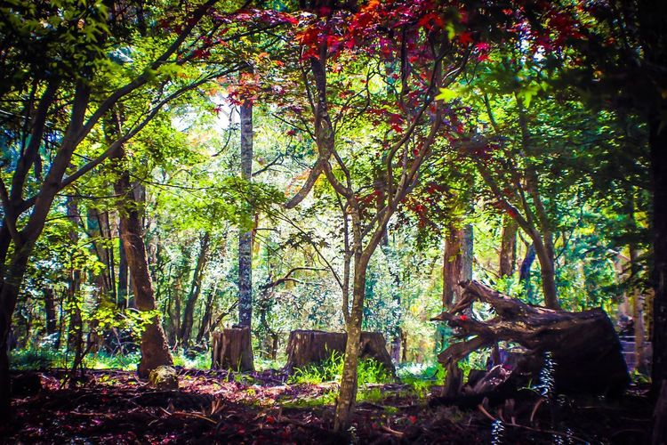 Fairytales & Dreams Fairytale Forest Nature_collection Beauty In Nature Tree_collection  Tree Forest Nature Tree Trunk Growth Tranquility Outdoors Beauty In Nature Branch Day No People Forest Floor Art Is Everywhere Imagination Collection