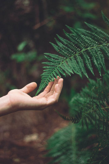 Midsection of person touching leaves