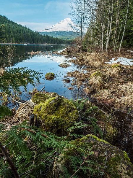 Beauty In Nature Day Forest Grass Growth Lake Landscape Mountain Nature No People Outdoors Scenics Sky Tranquil Scene Tranquility Tree Trillium Lake Water
