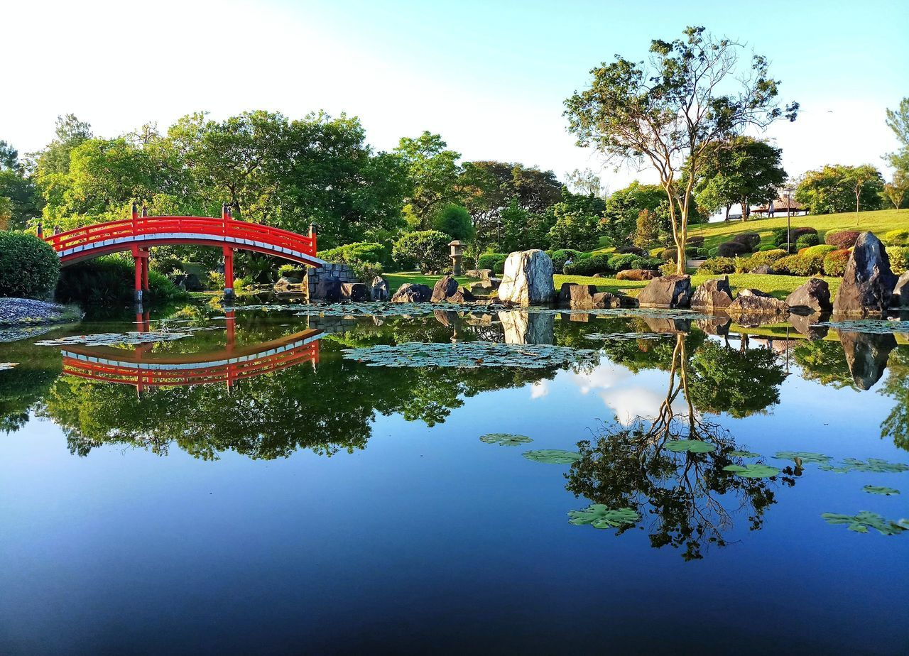 water, reflection, plant, tree, sky, nature, day, lake, waterfront, architecture, built structure, tranquility, beauty in nature, outdoors, park, growth, no people, park - man made space, swimming pool