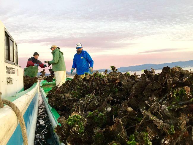 Japan Shizuoka-shi Boats Oyster Farming Working Since Before Sunrise Hard Working Men Ocean Sky And Water Welcome Aboard