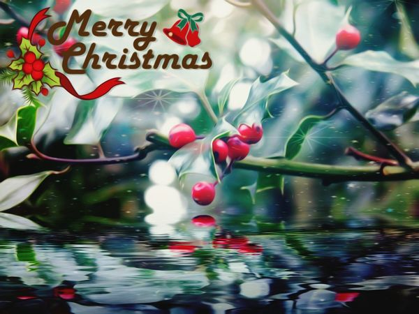 MerryChristmas To You All At EyeEm Studio Beauty In Nature Edit Junkie I'd like to thank all the people who have been following me over the last year have a wonderful Christmas and a peaceful one and a prosperous new year 🎅🎄🎅☃🎅Ho Ho Ho