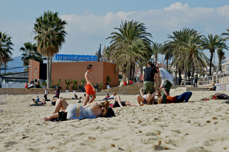 relaxing moment in the beach in Palma de Mallorca Sand Beach Group Of People Tropical Climate Real People Full Length Relaxation Leisure Activity Lifestyles Palm Tree Sitting People Outdoors Nature Day Adult Palma De Mallorca Sandy Beach Anima Beach Guys And Girls Taking Sun Enjoying Life
