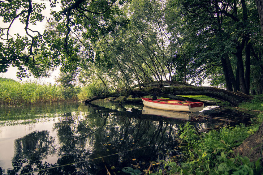 Beauty In Nature Branch Day Forest Grass Growth Lake Leaf Nature Nautical Vessel No People Outdoors Tranquil Scene Tranquility Tree Tree Trunk Water