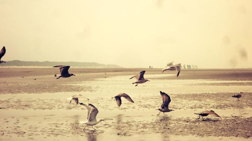 Oiseaux Bird Liberty photographie misslolaf *