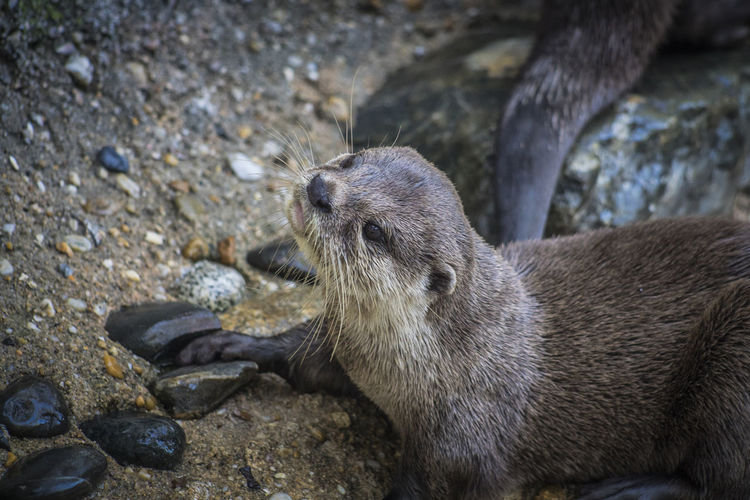Animal Wildlife Animals In The Wild Animal Animal Themes Mammal One Animal Solid Rock Rock - Object No People Vertebrate Underwater Nature Day Otter Outdoors Focus On Foreground Land Marine Whisker