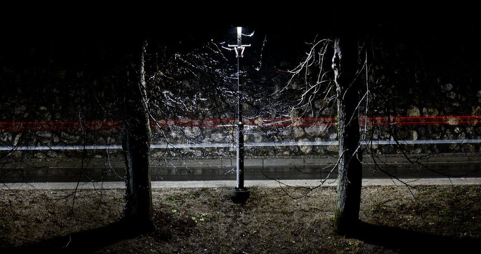 Illuminated tree against sky at night