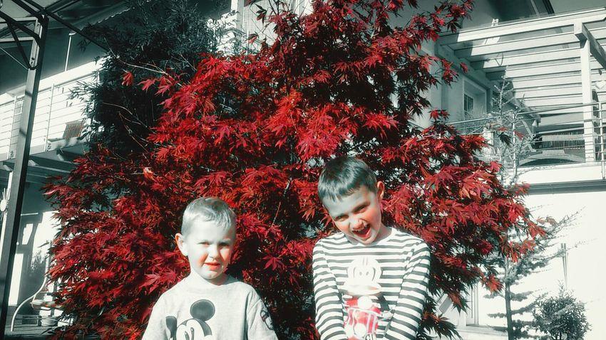 Alexander und Maximilian