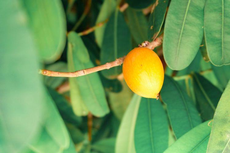 Forest fruit, I