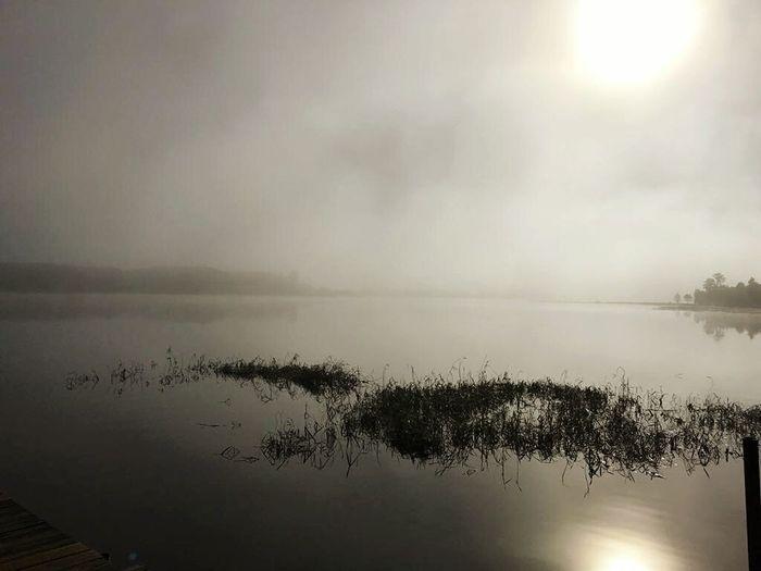 Foggy Morning Nature Sun Misty Morning Photography Nature Photography Orlando Florida Bill Fredericks Turkey Lake Park