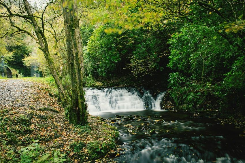 Water Tree Nature Waterfall No People Beauty In Nature Scenics Motion Tranquility Outdoors Forest Day Tranquil Scene Green Color Growth Ireland Glencar Waterfall Waterfalls Ireland Landscapes Autumn Power In Nature
