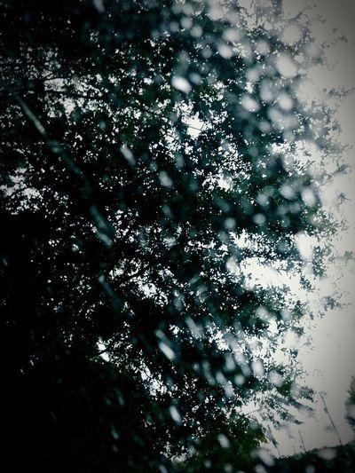 Tree Snowflake