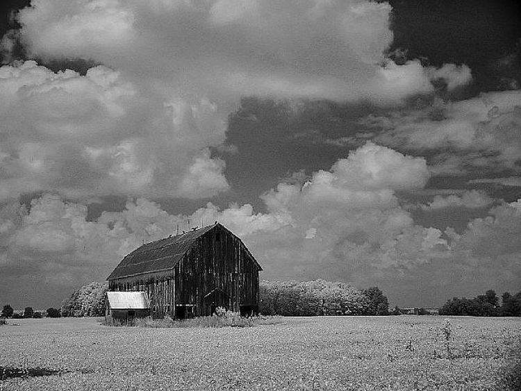Infrared- Country Barn Painting With A Camera EyeEm Best Shots Creative Light And Shadow Shades Of Grey First Eyem Photo Photography Black & White Fun Country Landscape