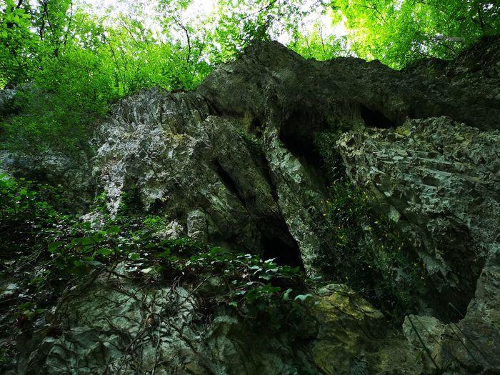 Wall Tree Water