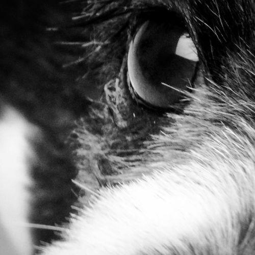 Olho Dog Eyem