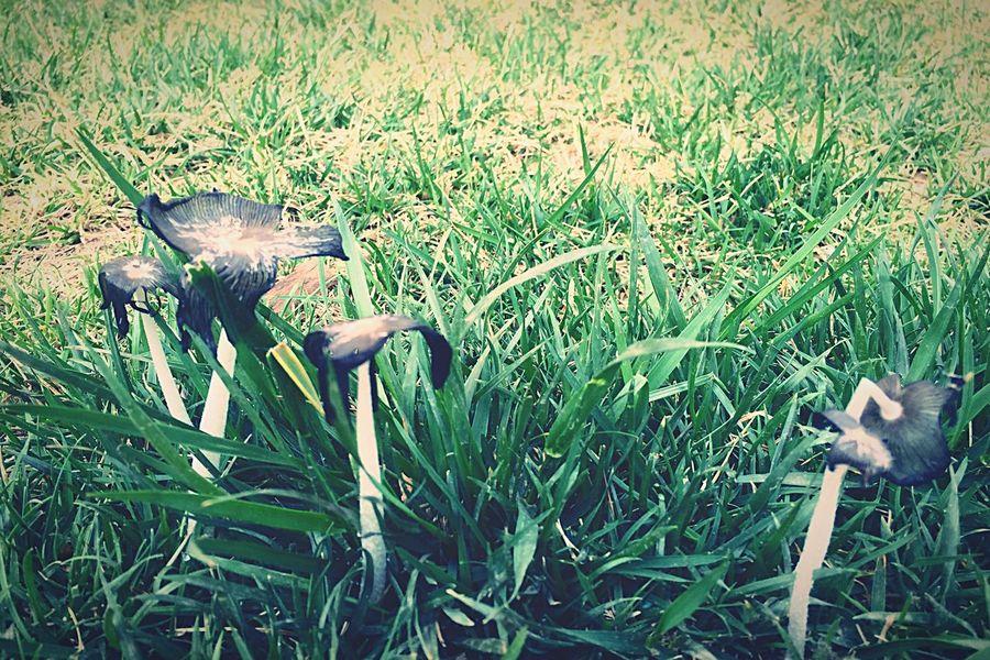 mushroom By Lemonni