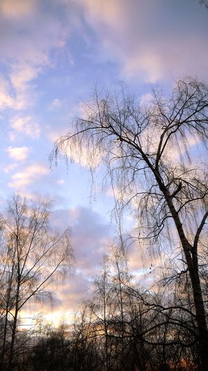 Reutov Evning Sky Sunset Clouds And Sky Sky Collection Trees And Sky