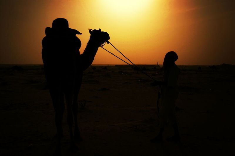 Person with camel against orange sky during sunset