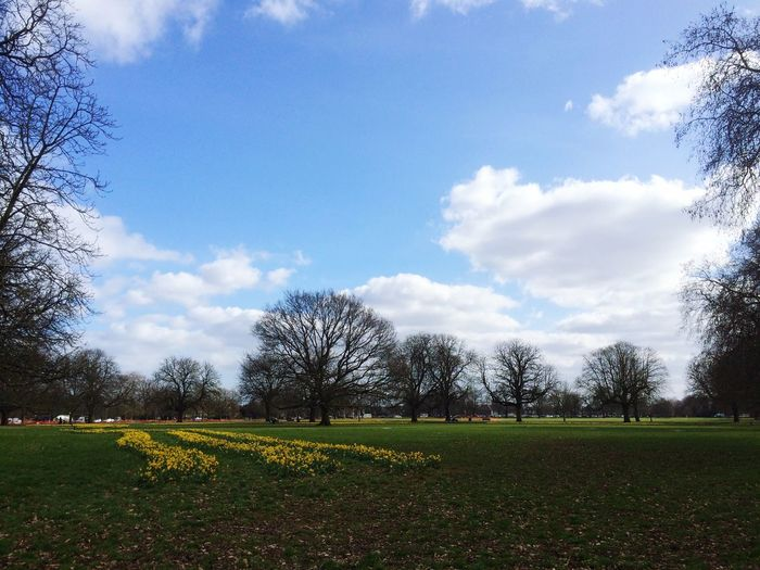 Spring is in the air... England, UK Enjoying Life LONDON❤ Spring Has Arrived Spring Flowers Spring Springtime Tree Cloud - Sky Sky Growth Nature Day Field Beauty In Nature Tranquility Outdoors Grass Flower No People Freshness