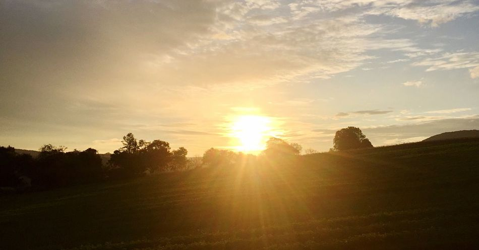Sunrise 🌅 Wienerwald  Sunrise Trees And Sky Trees Agriculture Sun Sunbeam Landscape Tranquility Tranquil Scene Sunlight No People Nature Scenics Field Sky Beauty In Nature Outdoors