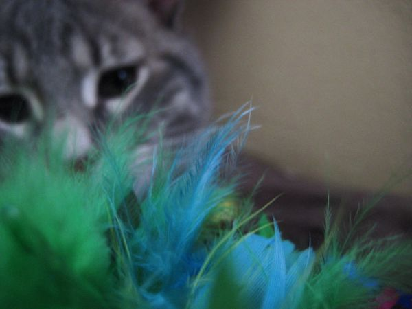 Kitten Aslan Feathers Blue Green Cat Adorable Color Of Life Photo Shoot Kittens Feather  Colorful Pretty Edited Professional EyeEm Best Shots EyeEm Animal Lover
